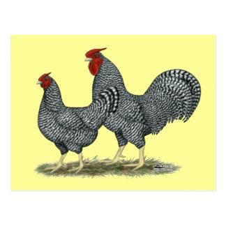 Dominique-Hühner Postkarten