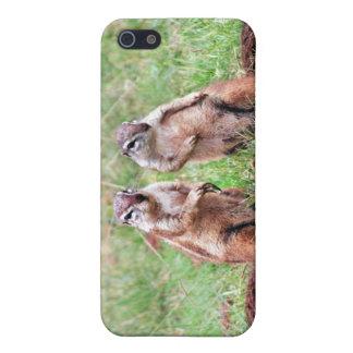 Doppeleichhörnchen Hülle Fürs iPhone 5