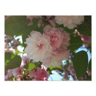 Doppelter blühender Frühling des Kirschbaum-I mit Fotodruck