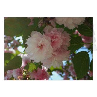 Doppelter blühender Frühling des Kirschbaum-I mit Karte