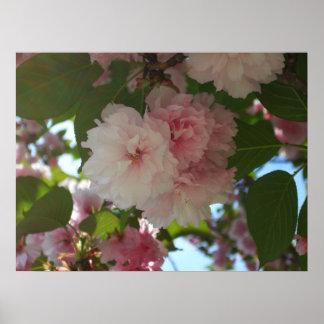 Doppelter blühender Frühling des Kirschbaum-I mit Poster