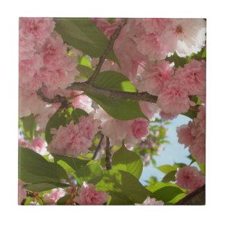 Doppelter blühender Frühling des Kirschbaum-III Fliese