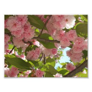 Doppelter blühender Frühling des Kirschbaum-III Fotodruck