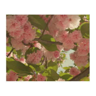 Doppelter blühender Frühling des Kirschbaum-III Holzdruck