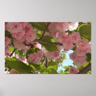 Doppelter blühender Frühling des Kirschbaum-III Poster