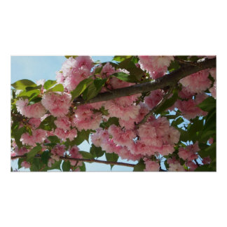 Doppelter blühender rosa Frühling der Poster