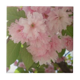 Doppelter blühender rosa Frühling des Fliese