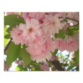 Doppelter blühender rosa Frühling des Fotodruck