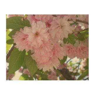Doppelter blühender rosa Frühling des Holzdruck