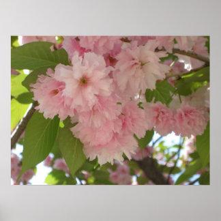 Doppelter blühender rosa Frühling des Poster
