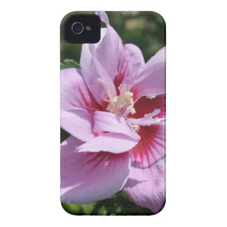 Doppeltes ging Sumpf-Malve Althaea Officinalis iPhone 4 Case-Mate Hülle