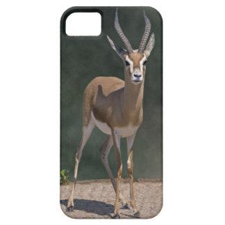 Dorcas Gazelle iPhone 5 Fall Hülle Fürs iPhone 5