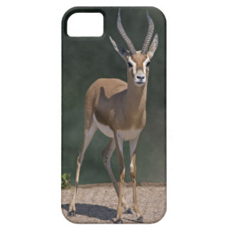 Dorcas Gazelle iPhone 5 Fall iPhone 5 Hülle