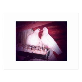 Dov'e L Amore Postkarten