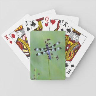 Drachefliege gehockt auf Gras, Kanada Spielkarten