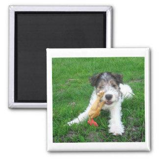 Draht-Foxterrier pup.png Quadratischer Magnet