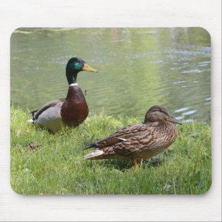 Drake und Ente im wilden Mousepads