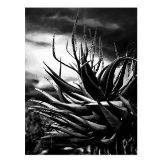 Drastischer Kaktus Postkarte
