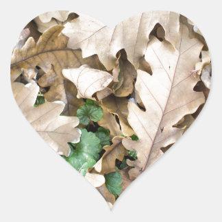 Draufsicht des gefallenen Eichen-Blätter Herz-Aufkleber