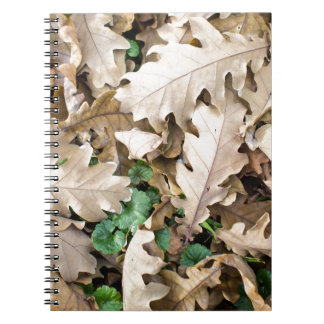Draufsicht des gefallenen Eichen-Blätter Spiral Notizblock