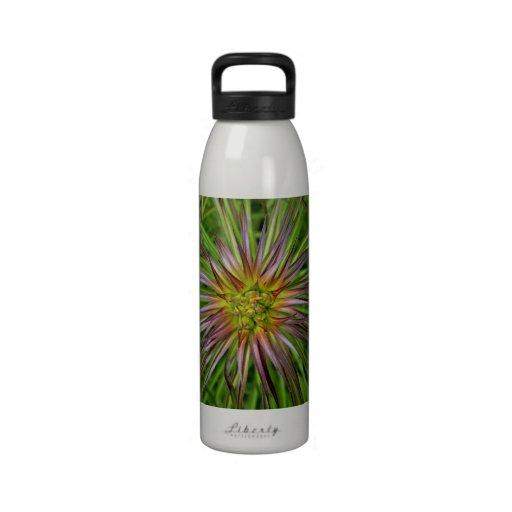 Draufsicht eines Lilium Regale Lilien-Blume Wasserflasche