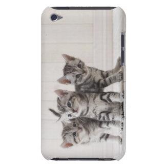 Drei Amerikaner Shorthair Kätzchen Barely There iPod Case