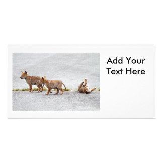 Drei Baby-Kojote-Spielen Individuelle Foto Karte
