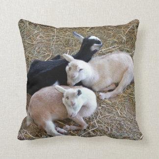 Drei Baby-Ziegen Kissen