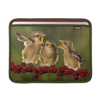 Drei BabyLanius Schach Vögel MacBook Sleeve