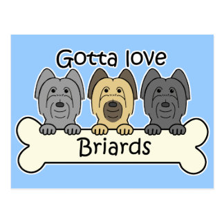 Drei Briards Postkarte