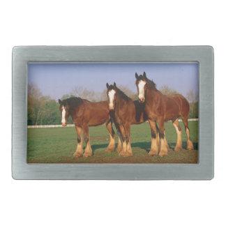 Drei Brown-Pferde Rechteckige Gürtelschnallen