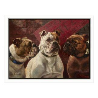 Drei Bulldoggen durch Charles Boland Postkarte