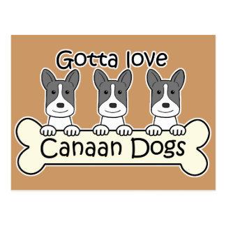 Drei Canaan Hunde Postkarte