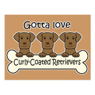 Drei Curly-Coated Retriever Postkarte