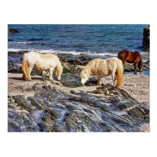 Drei die Shetlandinseln-Ponys auf Postkarte