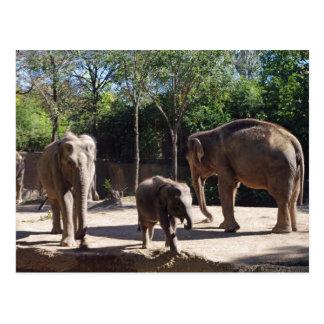 Drei Elefanten Postkarte
