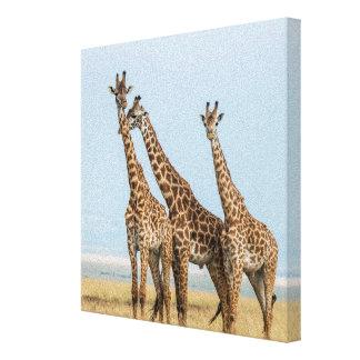 Drei Giraffen-Aufstellung Leinwanddruck