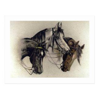 Drei Hand gezeichnete Pferdeköpfe Vintag Postkarte