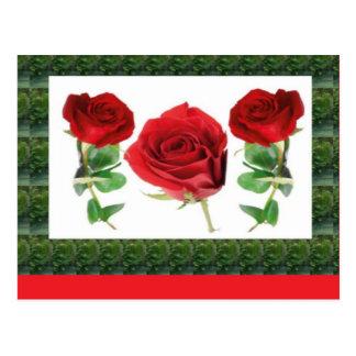 Drei HÜBSCHE Rosen Postkarten