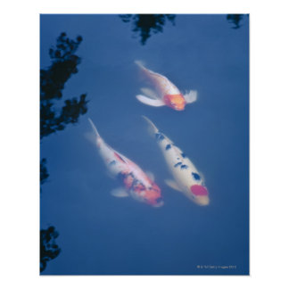 293 japanische fische poster zazzle for Fische in teich