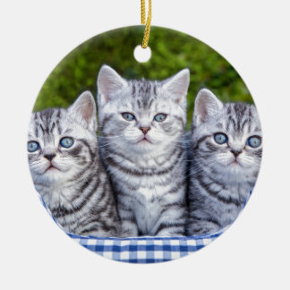 Drei junge silberne Tabbykatzen im karierten Korb Keramik Ornament