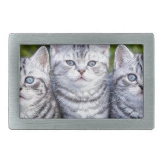 Drei junge silberne Tabbykatzen im karierten Korb Rechteckige Gürtelschnalle