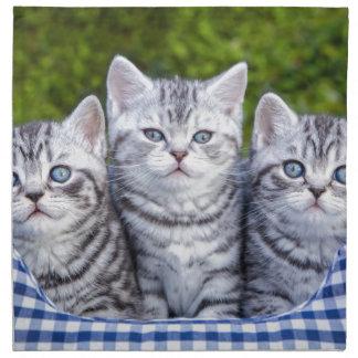 Drei junge silberne Tabbykatzen im karierten Korb Stoffserviette