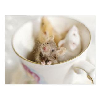 Drei kleine Mäuse Postkarte