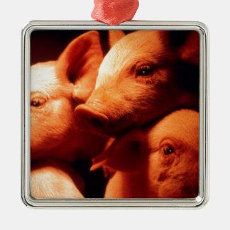 Drei kleine Schweine Silbernes Ornament