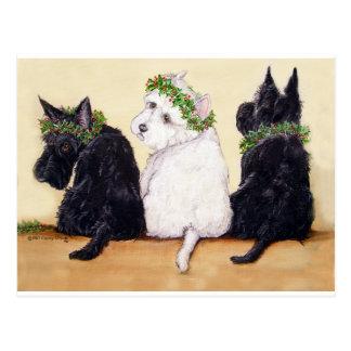 Drei kluge Terrier Postkarte