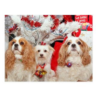 Drei kluges Hündchen-Weihnachten Postkarte