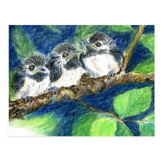 Drei Küken-ein-Dees - Aquarell-Bleistift Postkarten