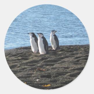 Drei neugierige Pinguine Runder Aufkleber