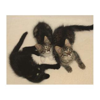 Drei niedliche Kätzchen-Holz-Leinwand Holzdruck